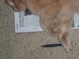 even-my-cat-is-a-geekresize