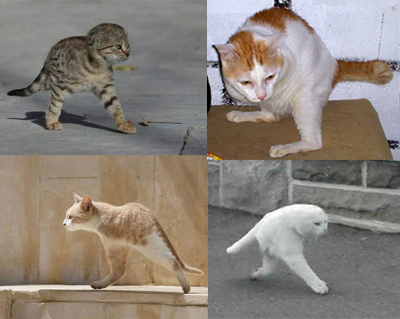 Two Legged Cat Meme